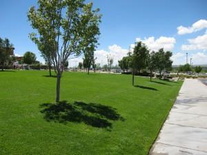 Commercial-Landscape