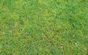 Snohomish-Moss-Treatment
